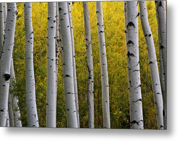 Aspen Light 3 Metal Print