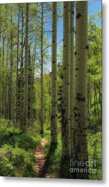 Aspen Lined Hiking Trail Metal Print by Mitch Johanson