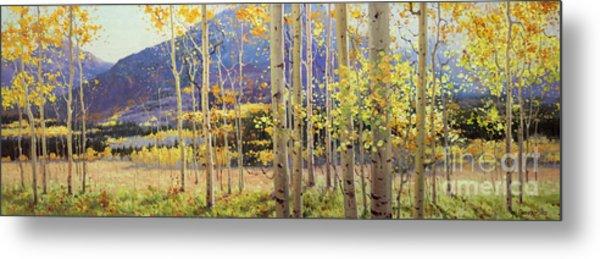 Panorama View Of Aspen Trees Metal Print