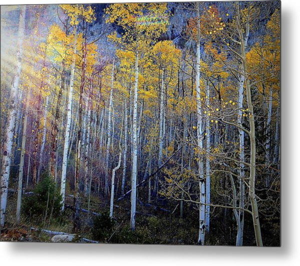 Aspen Sunset Metal Print