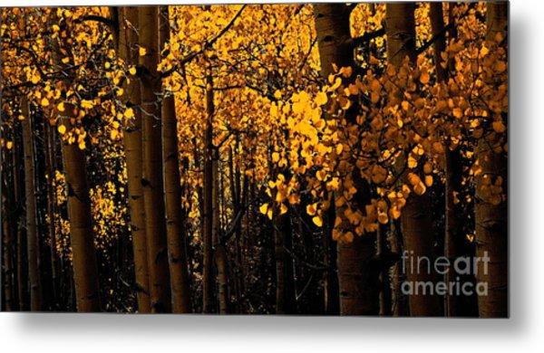 Aspen Woods Metal Print