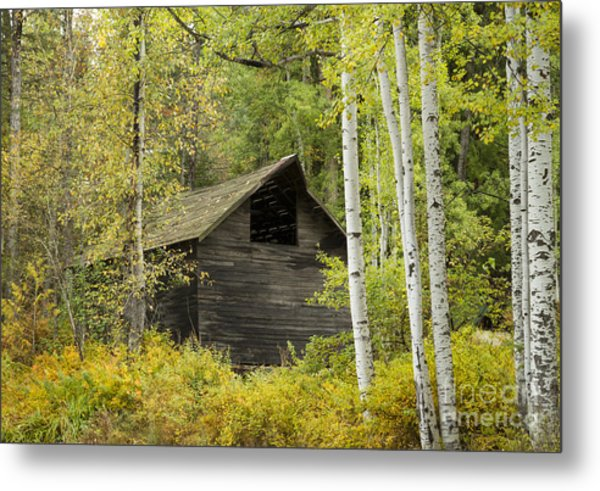 Aspens And Barn Metal Print