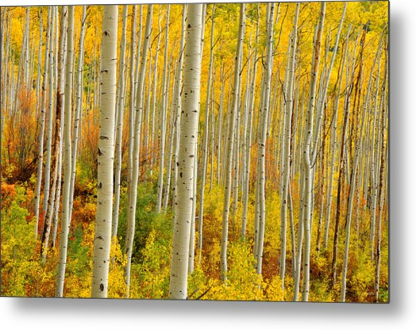 Aspens In The Colorado Rockies Metal Print