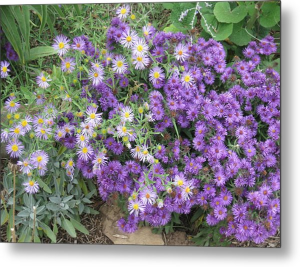 Asters Light And Dark Metal Print