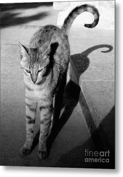 Aswan Cat Metal Print