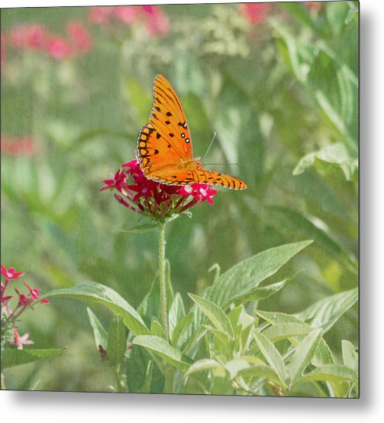 At Rest - Gulf Fritillary Butterfly Metal Print