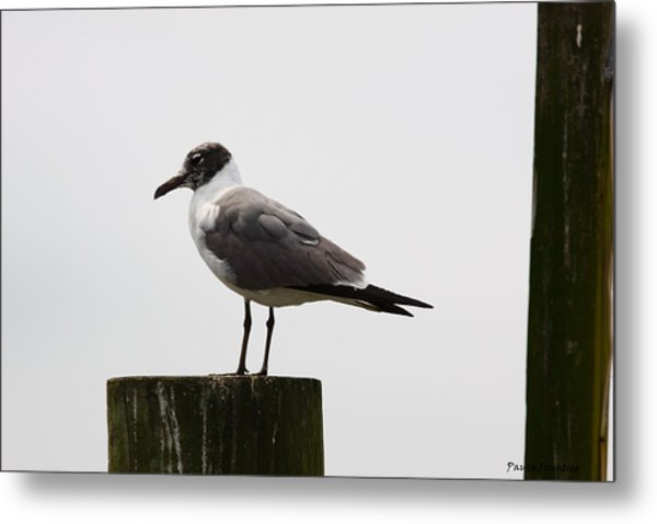 At Rest Metal Print by Paula Rountree Bischoff