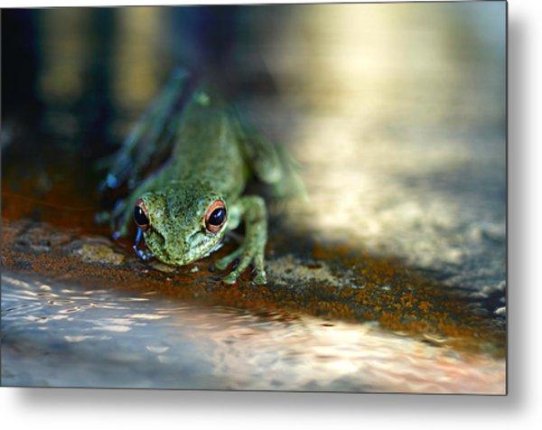 At Swim One Frog Metal Print