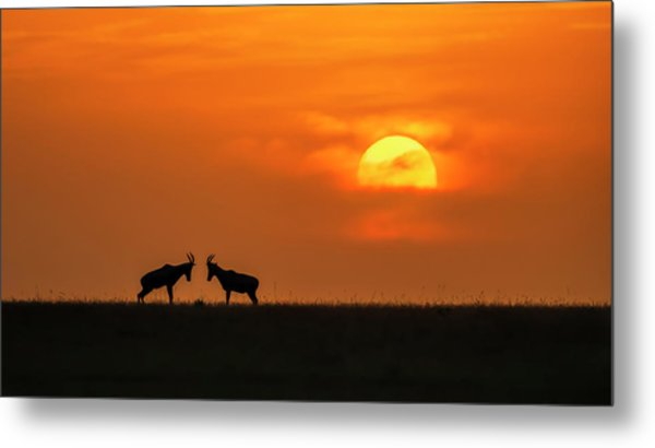 At The Sunset Metal Print by Jun Zuo