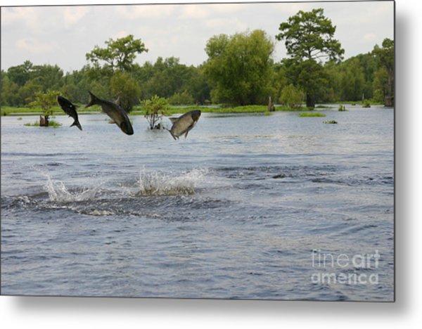 Atchafalaya Swamp Jumping Fish Metal Print
