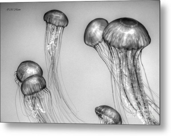 Atlantic Jellyfish - California Monterey Bay Aquarium Metal Print
