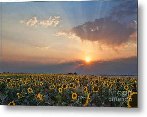 August Dreams Metal Print