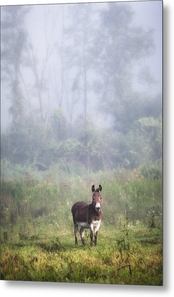 Metal Print featuring the photograph August Morning - Donkey In The Field. by Gary Heller
