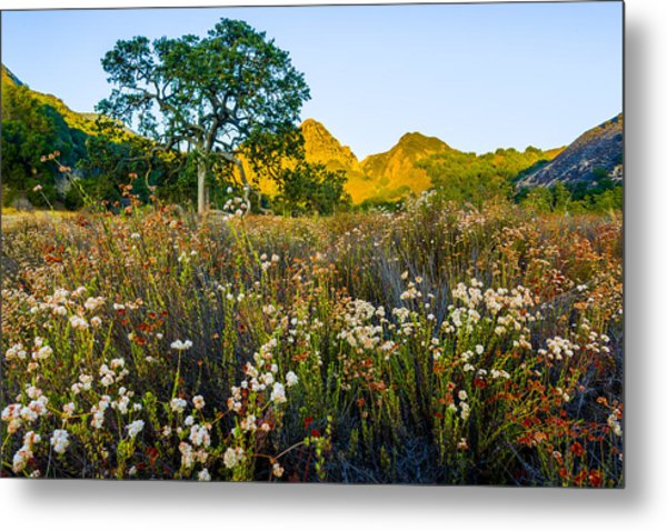 August Sunrise In Malibu Creek State Park Metal Print