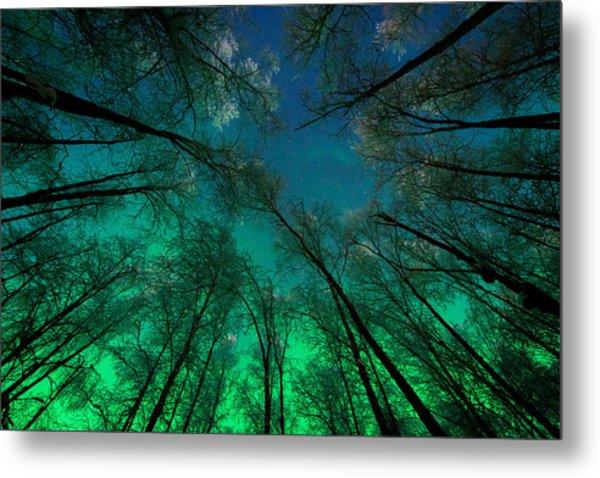 Aurora Glow Through The Birches Metal Print
