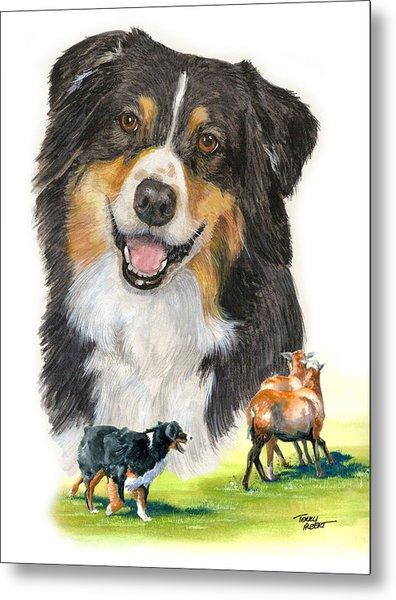 Australian Shepherd Herding Metal Print