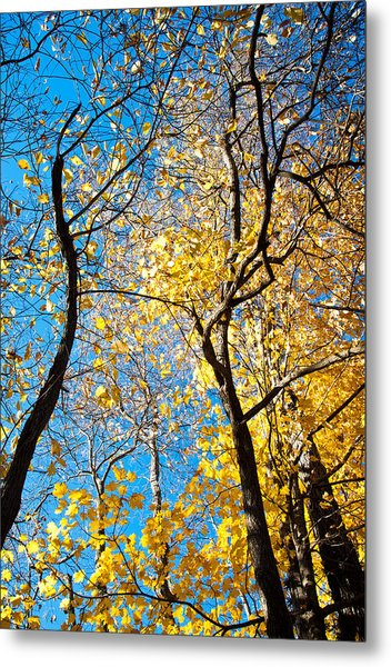 Autumn Abstract Metal Print by Jeanne Sheridan