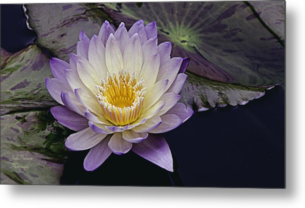 Autumn Aquatic Bloom Metal Print