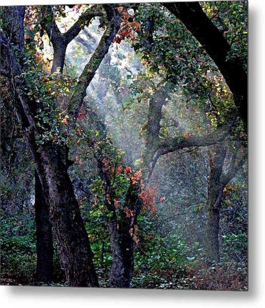 Autumn At First Light Metal Print
