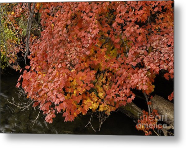 Autumn At Suttle Lake Metal Print