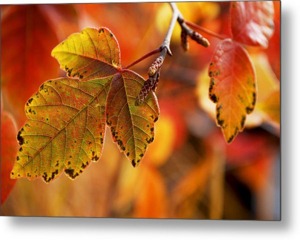#autumn Metal Print