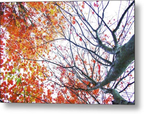 Autumn Bleeds Metal Print