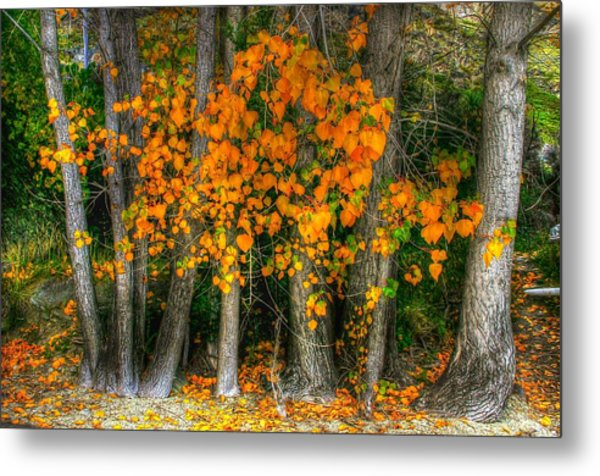 Autumn Breakout No.2 Metal Print