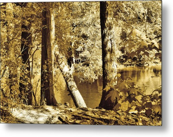 Autumn Breeze  Metal Print by Thomas  MacPherson Jr