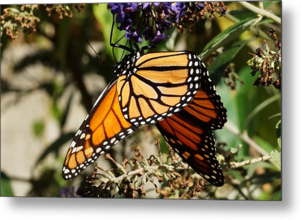 Autumn Butterfly Metal Print