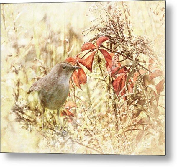 Autumn Catbird Metal Print