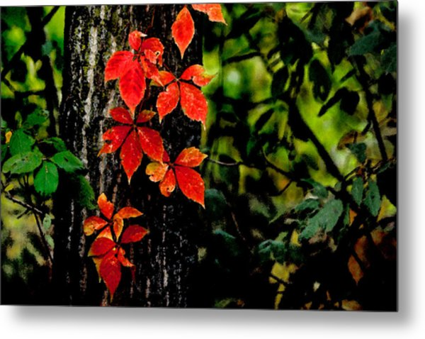 Autumn Climber Metal Print