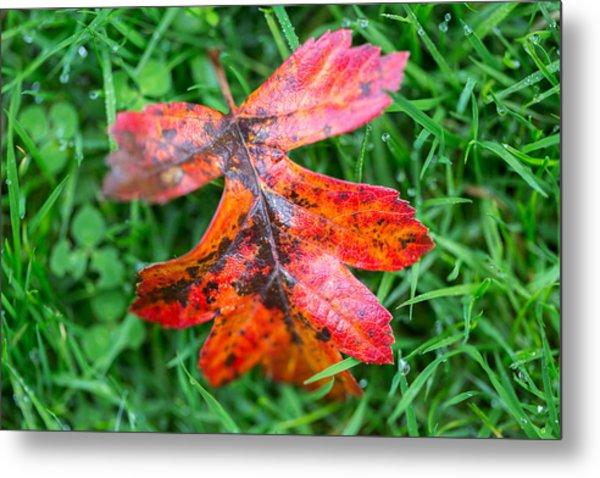 Autumn Colours. Metal Print