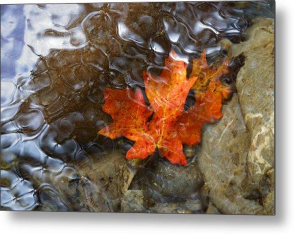 Autumn Down Under Metal Print
