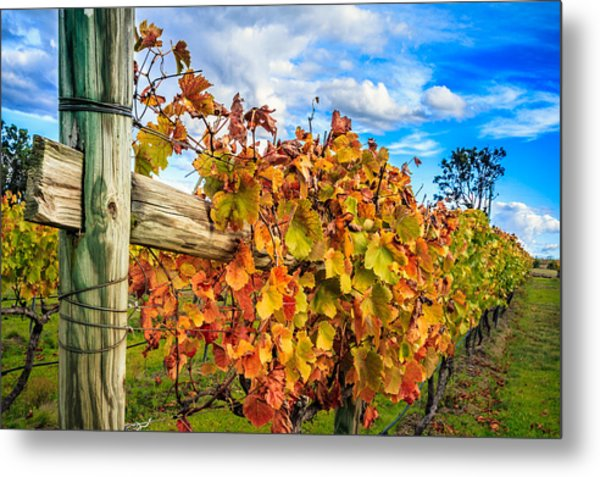 Autumn Falls At The Winery Metal Print