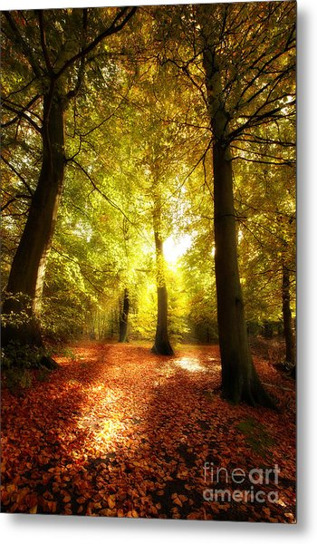 Autumn Forest Metal Print by Boon Mee