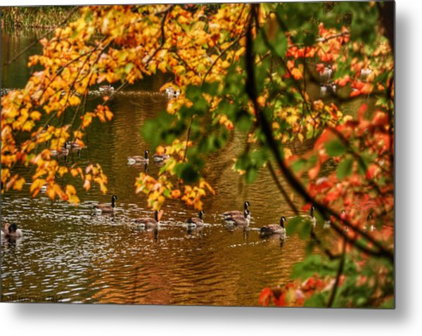 Autumn Geese Abstract Metal Print by Kathi Isserman