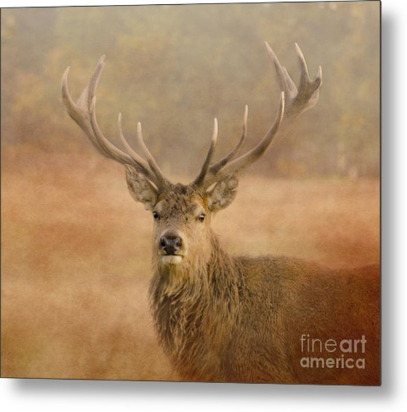 Magnificant Stag Metal Print