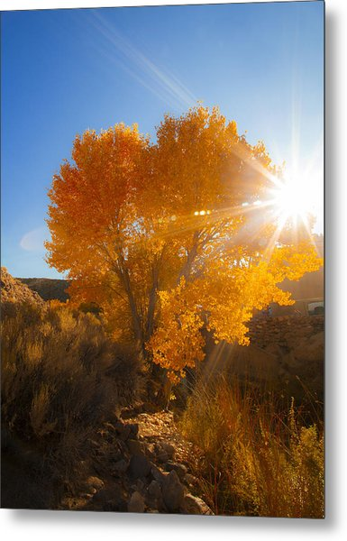 Autumn Golden Birch Tree In The Sun Fine Art Photograph Print Metal Print