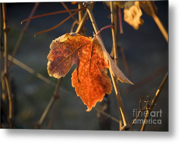 Autumn Grape Leaf Metal Print