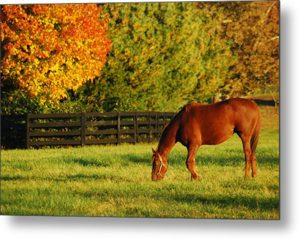 Autumn Grazing Metal Print