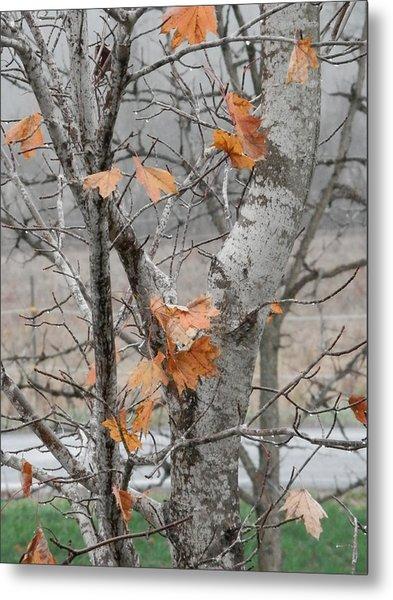Autumn Grey Metal Print by Margaret McDermott