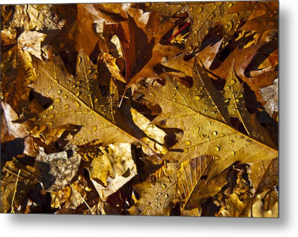 Autumn Groundcover Metal Print