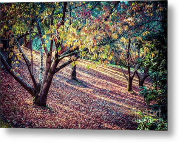 Autumn Grove Metal Print