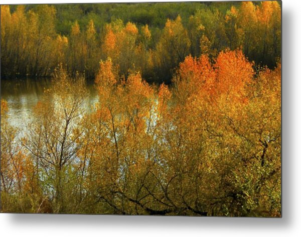 Autumn Ignites Metal Print