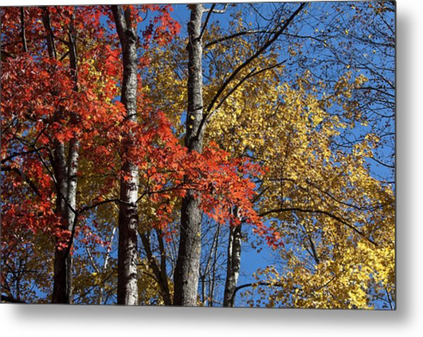 Autumn II Metal Print