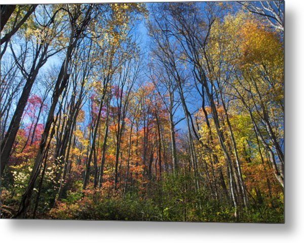 Autumn IIi Metal Print