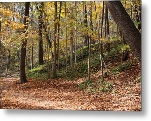 Autumn In Grant Park 4 Metal Print