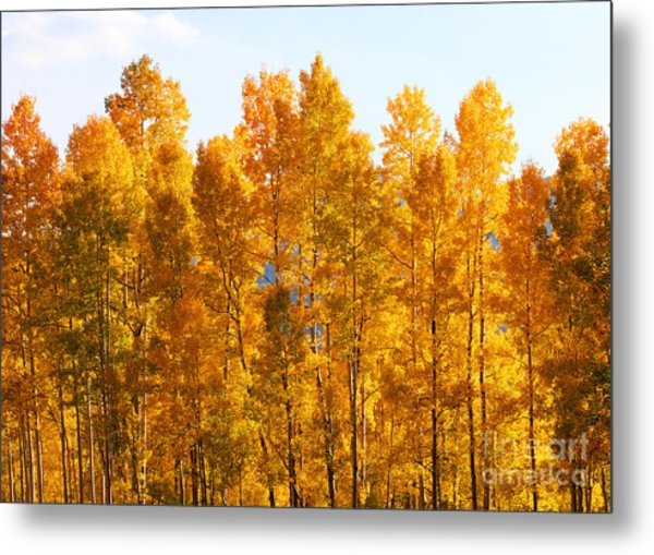 Metal Print featuring the photograph Autumn In The Rockies by Kate Avery