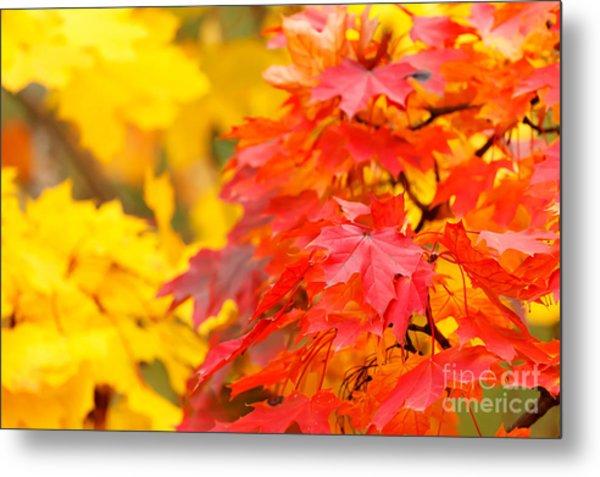 Autumn Is Beautiful Metal Print