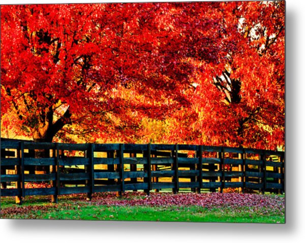 Autumn Kentucky Maples Metal Print